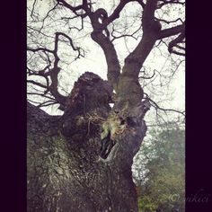 yikici | When Tree's Come to Life… Dog Walking, Paths, Life, Image