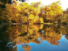 Forêt de Saint-Germain-en-Laye v Saint-Germain-en-Laye, Île-de-France, Miesto, kde sa Claude Debussy narodil 22.augusta 1862.