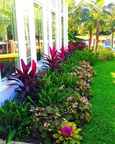 Easy and Cheap Landscaping Ideas That Look Anything But Steal these cheap and easy landscaping ideas​ for a beautiful backyard and front yard.Steal these cheap and easy landscaping ideas​ for a beautiful backyard and front yard. Florida Landscaping, Tropical Landscaping, Outdoor Landscaping, Front Yard Landscaping, Outdoor Gardens, Tropical Patio, Farmhouse Landscaping, Tropical Gardens, Florida Gardening