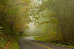 Sapna Reddy Photography  -  Misty morning drive in the Smoky Mountain National Park
