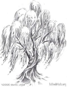 sexy Tree Tattoo Designs For Women | Pin Weeping Willow Tree Tattoo Tattoos Zimbio on Pinterest