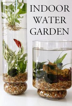 27 Awesome indoor water garden inspirations to grow plants In water year round #urbangardening http://www.zhounutrition.com/