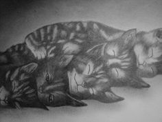 graphite portrait of sleeping kittens by 1bluwall on Etsy