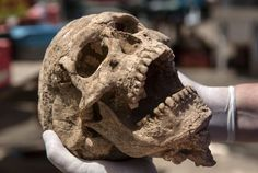 Picture of skull from the excavation of the Philistine cemetery