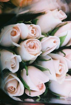 Pretty pale pink blooms via Katie Armour