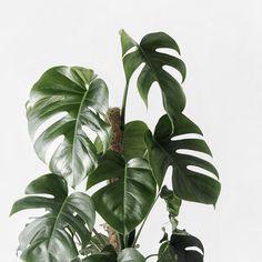 - ̗̀ it's a beautiful day ̖́- Succulent Hanging Planter, Cactus Plante, Plants Are Friends, Plant Aesthetic, Tropical Vibes, Green Plants, Houseplants, Indoor Plants, Plant Leaves