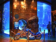 The Aquarium at the Silverton Hotel 3333 Blue Diamond Rd. Las Vegas, NV 89139 Phone: Location: Located at the Silverton Hotel near the intersection of Blue Diamond Road and Industrial Road. About 5 miles from the Vegas Strip. Las Vegas Free, Las Vegas With Kids, Las Vegas Attractions, Las Vegas Hotels, Vegas Activities, Species Of Sharks, Vegas Sign, Vegas Shows, Travel Usa