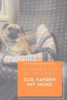 Zug-fahren-mit-Hund-lernen-ganz-einfach