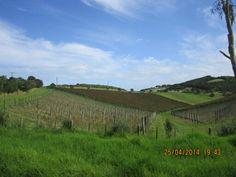 Mudbrick vineyard, Waiheke Island #NewZealand #Memories