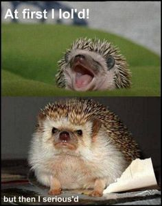 Funny Baby Pictures with Captions | Cute+animals+pictures+with+captions