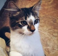 #OptToAdopt: Why Not Take Home a Little Faye to Play - Greenville, SC