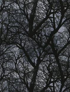 Designerstoffe USA - Baumwollstoff Wicked Bäume Timeless Treasures - ein Designerstück von JaVi-Stoffe bei DaWanda