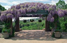 Best decision of my life was made here. Married my wife under the wisteria at Red Butte Gardens, Salt Lake City.
