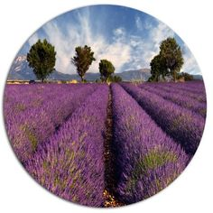 """DesignArt 'Lavender Field on Windy Afternoon' Flower Photographic Print on Metal Size: 11"""" H x 11"""" W x 1"""" D"""