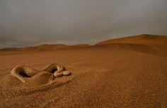 Peringuey's adder (Bitis peringueyi) in Swakopmund Dune Fields, Namibia