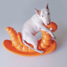 #Bull #Terrier:)
