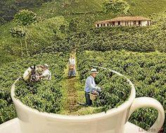 Un eje atractivo para el turismo y la inversión (Eje Cafetero Colombia)