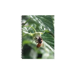 The Bee on the Raspberry Bush Note Book