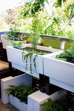 My balcony garden is coming along nicely https://i.imgur.com/B4xZwjQ.jpg