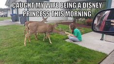 Can this please be me Funny Pins, Disney Princess Facts, Funny Deer, Really Funny Pictures, Funny Photos, Animal Memes, Funny Animals, Cute Animals, Funny Cute