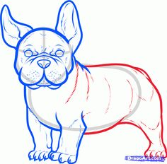 How to Draw a French Bulldog, French Bulldog, Step by Step, Pets, Animals, FREE Online Drawing Tutorial, Added by Dawn, February 21, 2013, 8:18:26 pm