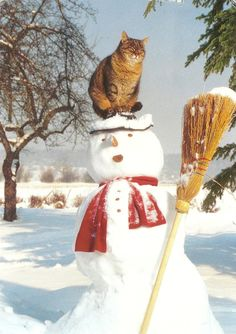 @ Pamela ...My Favorite Animal Postcards: Cats-Cat on a Snowman with Broom    Printed in Germany, but postmarked from the Netherlands  2011