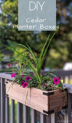 Easy Cedar Planter Boxes Build your own cedar planter boxes with these free plans - customize them for window boxes or to decorate the porch or patio. Railing Planter Boxes, Planter Box Plans, Cedar Planter Box, Fence Planters, Diy Planter Box, Window Planter Boxes, Window Box Diy, Cedar Window Boxes, Diy Wooden Planters