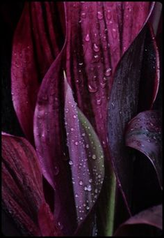 All purple flowers are beautiful and with meanings of their own. Beautiful purple flowers for your garden Purple Love, All Things Purple, Purple Rain, Shades Of Purple, Purple Flowers, Magenta, Plum Purple, Plum Colour, Purple Colors