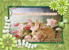 Rabbit, Blog, Animals, Bunny, Rabbits, Animales, Animaux, Bunnies, Blogging