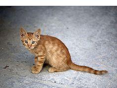 Orange cat. (Photo on fStop by Halfdark) #photography #cats