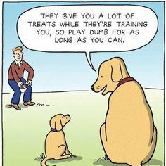 Puppy Training Schedule: What to Teach Puppies, and When. This step-by-step dog training guide will get you started. Funny Cute, Funny Shit, The Funny, Funny Stuff, La Cloche Et L'idiot, Friday Cartoon, Cartoon Fun, Cartoon Jokes, Dog Memes