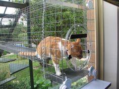 cat enclosure pinterest | Catnip Cat enclosures | Fiona Lowe. Romance Fiction for Today, Small ...