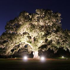 The 500 year old oak tree at my favorite place in the world- airlie gardens, wilmington, nc.