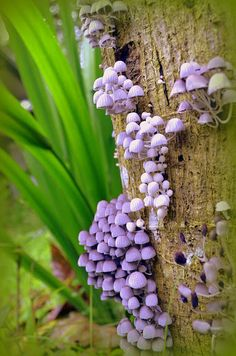 God's family of fungi are even pretty in their own right.