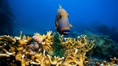 Come face to face with colorful fish - Try scuba diving! KILROY