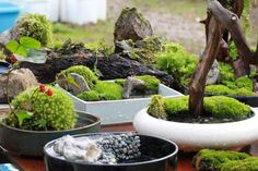 Sulak bahçe