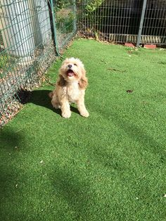 We provide Best quality pet boarding for your Dogs and Cats in Bundoora. Pet Boarding, Your Pet, Dog Cat, Pets, Baby, Animals, Animales, Animaux, Infants