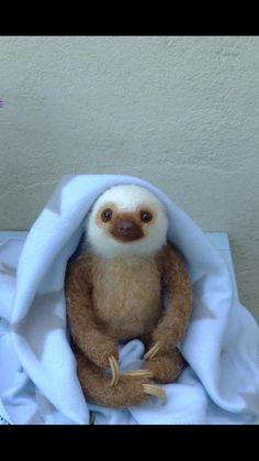 Just a cute baby sloth. One just like it was born at the Denver Co (USA) zoo recently. Youre welcome!