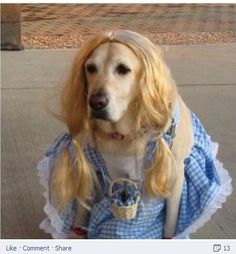 it is time to post some dog costumesblues brothers cute pinterest posts it is and halloween costumes - Halloween Costumes For Labradors