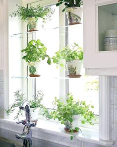 glass shelves, white pots or acrylic shelfs Glass Shelves At Home Depot Glass Shelves In Living Room Glass Window Shelves Homey Kitchen Window Shelf Ideas Best Shelves On Diy Glass Window Shelves – Outdoor Furniture 24 Indoor Gardening Ideas You Don't Kitchen Garden Window, Kitchen Window Shelves, Herb Garden In Kitchen, Kitchen Plants, Garden Windows, Kitchen Decor, Kitchen Windows, Homey Kitchen, Kitchen With Plants