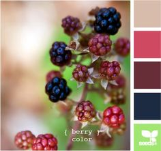 berry colour