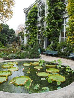 Botanical Garden (small botanic garden) - Hortus Botanicus