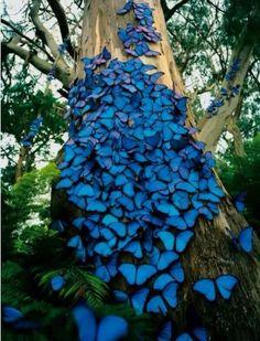 Árbol de las mariposas