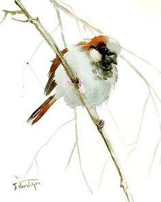 Male Sparrow, 10 X 8 in, original watercolor painting sparrow art, sparrow painting, bird art