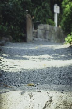 Check out Gravel Path by Lemonee on the Hills on Creative Market Gravel Path, Abstract Photos, Paths, Creative, Check, Gravel Pathway