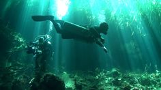 If there ever was a dive that far exceeds all expectations, then this is it. Curtains of playing light beams, Great haloclines, beautiful scenery under the m. Light Beam, Beautiful Scenery, Underwater, Beams, Under The Water, Exposed Beams