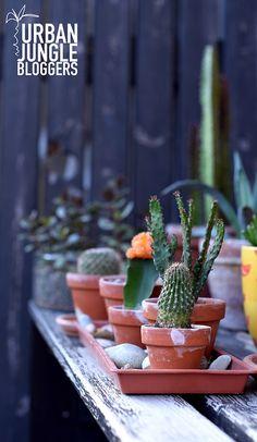 UJB   A brigád a teraszra költözött Urban, Plants, Food, Essen, Meals, Plant, Yemek, Eten, Planets