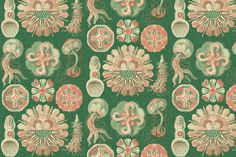 Sea Creatures in Coral fabric by sparrowsong on Spoonflower - custom fabric/wallpaper
