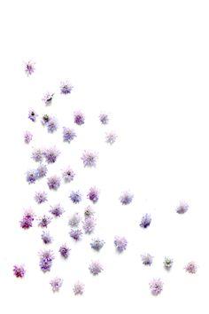 a different kind of lavender - STILL