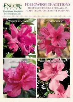 Azaleas Landscaping, Front Yard Landscaping, Landscaping Ideas, Azalea Color, Hydrangea Garden, Hydrangeas, Traditional Landscape, Container Flowers, Garden Styles